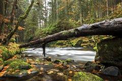 Rivière Großer REGEN en Bavière, Allemagne Photographie stock