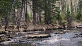 Rivière idéaliste de montagne de paysage de ressort au clips vidéos