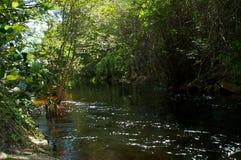 Rivière impériale Bonita Springs la Floride coulant vers la visionneuse Photographie stock libre de droits