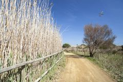Rivière naturelle de Llobregat de delta de secteur, près de couillon-Barc d'EL d'aéroport photographie stock