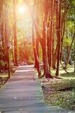 Rivière paisible dans la forêt des tropiques, tôt le matin Image stock
