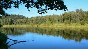 Rivière paisible entrant dans la forêt clips vidéos
