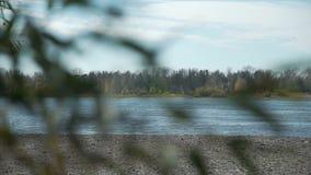 Rivière par des branches de saule en automne de Th banque de vidéos
