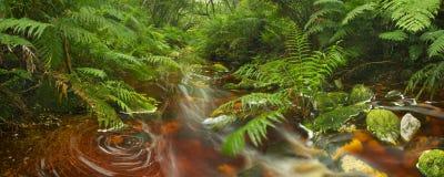 Rivière par la forêt tropicale dans l'itinéraire NP, Afrique du Sud de jardin photo stock