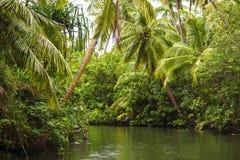 Rivière par une forêt tropicale Image libre de droits