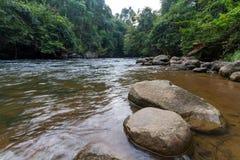 Rivière parmi des bois Photographie stock libre de droits