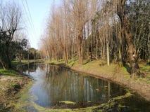 Rivière passant par la forêt Photos stock