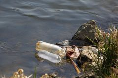 Rivière polluée photos libres de droits