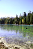 Rivière près de forêt Images libres de droits