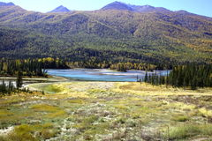 Rivière près de forêt Image libre de droits