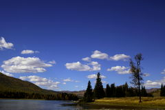 Rivière près de forêt Image stock