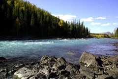 Rivière près de forêt Photos stock