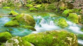 Rivière profondément dans la forêt de montagne. image libre de droits