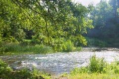 Rivière propre peu profonde en été, rivière peu profonde d'hurlement image stock