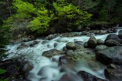 Rivière rapide de montagne Image stock