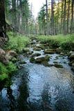 Rivière rapide de montagne dans les collines des collines secteur Bois?-montagneux Forest River La Russie photo libre de droits