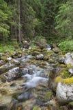 Rivière rapide de montagne de forêt à l'été image stock
