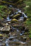 Rivière rapide de montagne, ressort dans Carpathiens, Ukraine photographie stock