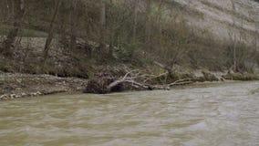 Rivière remplie après pluie torrentielle d'ouragan banque de vidéos