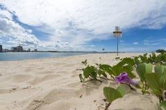 Rivière Sandy Beach Cotton Tree de Maroochy Images stock