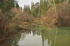 Rivière sauvage Image libre de droits