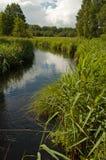 Rivière sauvage en Pologne Vue verticale Image libre de droits
