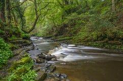 Rivière se précipitant par la région boisée antique Images libres de droits
