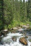 Rivière sibérienne Images stock