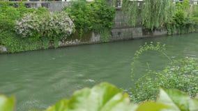Rivière slovène de Ljubljanica banque de vidéos