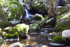Rivière squelettique de Kirstenbosch photographie stock libre de droits