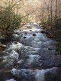 Rivière traversant les arbres Photos libres de droits
