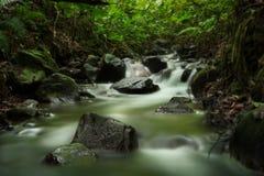 Rivière verte de forêt tropicale un jour nuageux photographie stock
