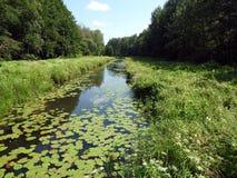 Rivière Vorycia, plantes vertes et ciel bleu, Lithuanie Image libre de droits