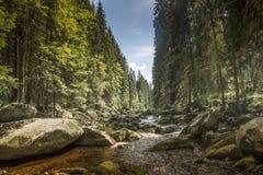 Rivière Vydra en montagnes de Sumava Photographie stock