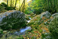 Rivi?re rapide de montagne dans les collines des collines secteur Bois?-montagneux Forest River L'Extr?me Orient, ?le de Sakhalin photo stock