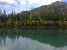 Rivi?re verte R?flexion de for?t d'automne dans l'eau Autumn Landscape Rivi?re de Chuya Montagnes d'Altai photo libre de droits