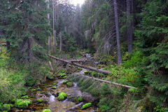 Rivier. Mountain River Tatry Poland - wallpaper stock image