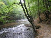 rivier Royalty-vrije Stock Foto's