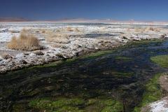 Rivier aan Laguna Salada Stock Fotografie