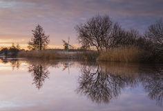 Rivier Ant Reflections Stock Afbeelding