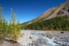 Rivier, bergen en hout. Stock Afbeeldingen