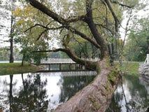 , rivier, boom royalty-vrije stock afbeeldingen