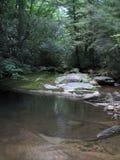 Rivier in bos stock afbeelding