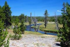 Rivier in bos met groene en dode bomen Royalty-vrije Stock Afbeeldingen