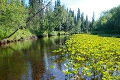Rivier in de bossen van de Republiek van de Komi-Republiek. Royalty-vrije Stock Afbeelding