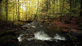 Rivier in de herfst met aardgeluiden stock videobeelden