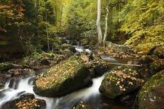 Rivier in de herfstbos Stock Foto