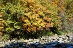 Rivier in de herfstbos Stock Foto's