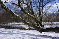 Rivier in de winter met sneeuw in park in Duitsland Royalty-vrije Stock Afbeelding