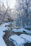 Rivier in de winterhout Royalty-vrije Stock Afbeelding